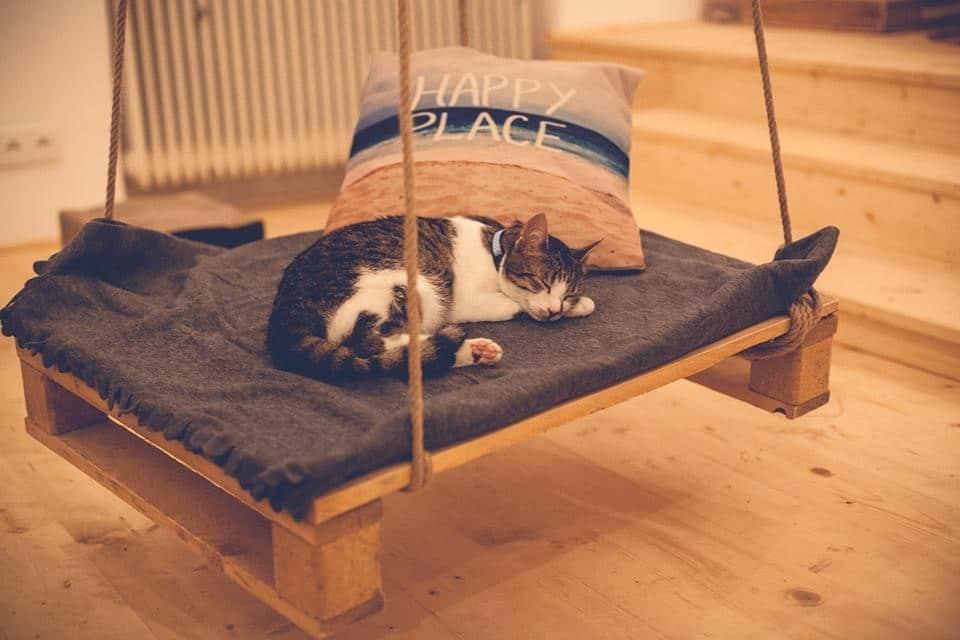 Černá kočička si sát