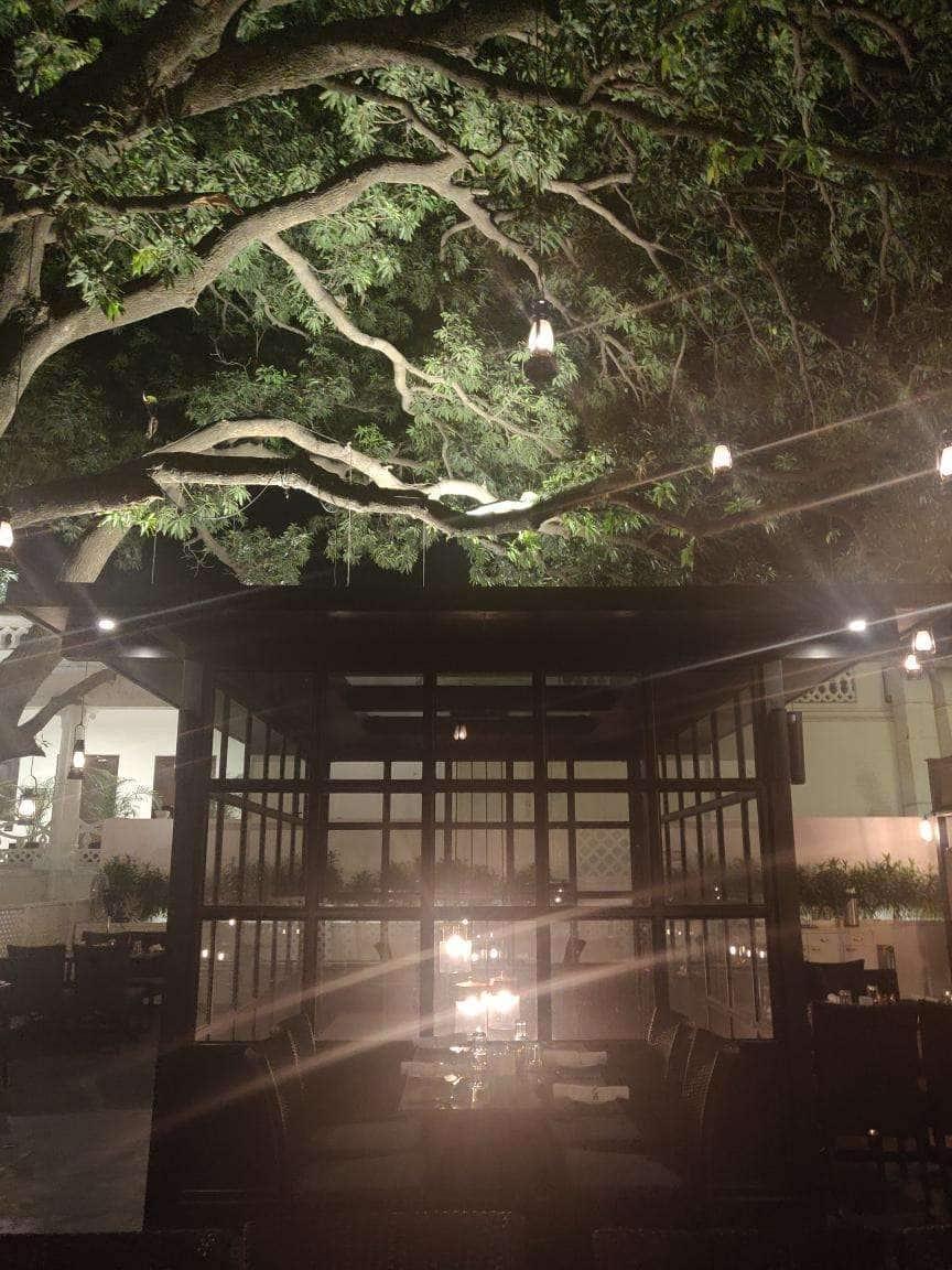 Under The Mango Tree - Jehan Numa Palace