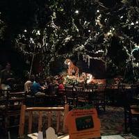 Grapevine Rainforest Cafe Hours